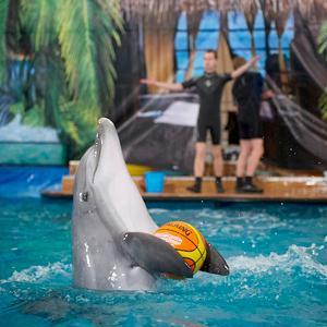 Дельфинарии, океанариумы Орехово-Зуево