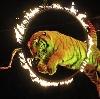 Цирки в Орехово-Зуево