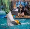 Дельфинарии, океанариумы в Орехово-Зуево